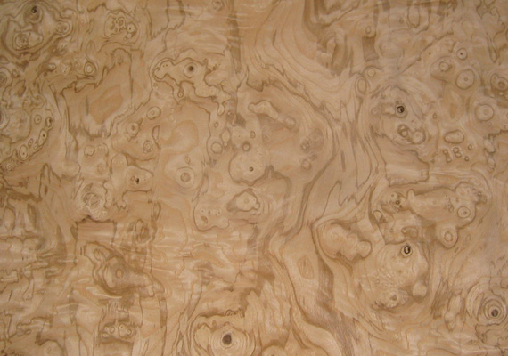 Radica di Frassino - essenza legno ELITWOOD srl
